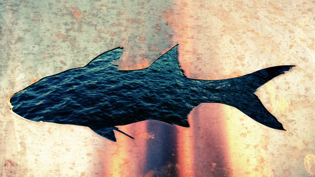 Laser cut fish from a stainless steel sheet. Installed near Cairns marina.