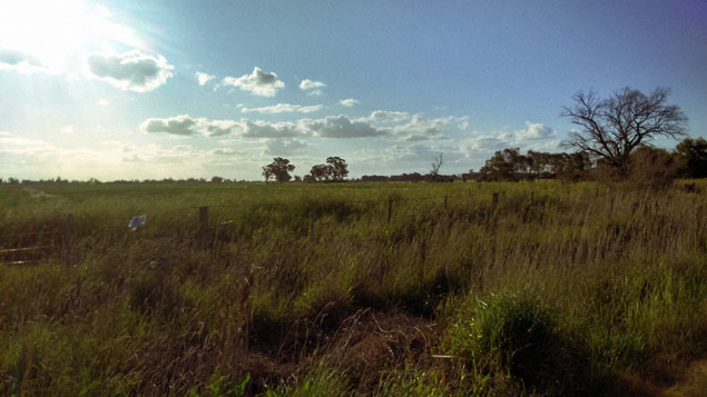 A photo across the fields outside Numurkah, Victoria.